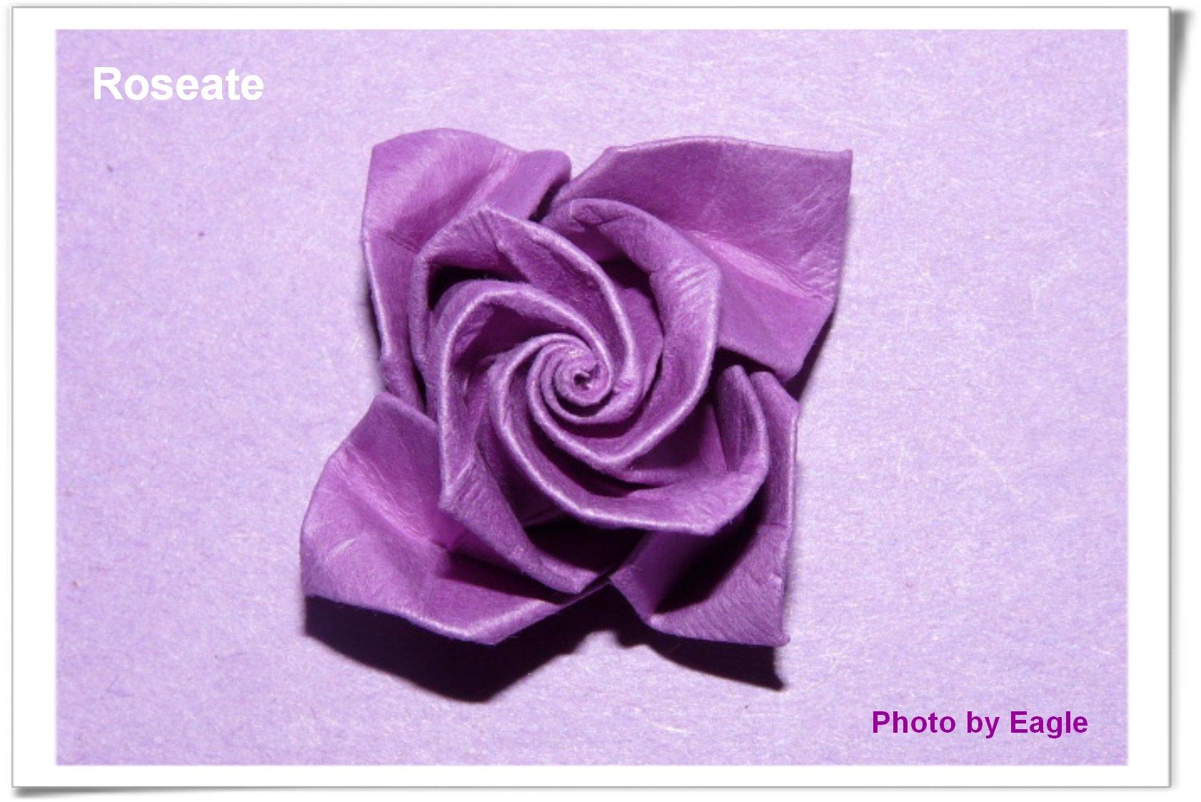 紫玫瑰 roseate