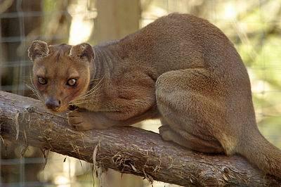 马达加斯加岛的神秘动物