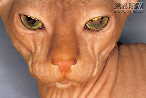 [宠物园地]最令人类害怕的动物牙齿